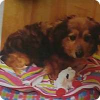 Adopt A Pet :: Marty - Bernardston, MA