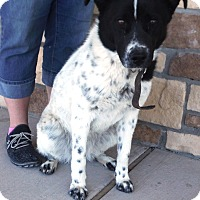 Adopt A Pet :: Morgan - Artesia, NM