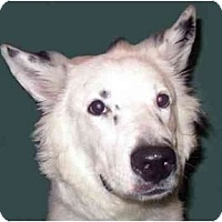 Adopt A Pet :: Spencer - New York, NY