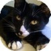 Adopt A Pet :: Evie - Vancouver, BC