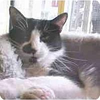 Adopt A Pet :: Gina - Lunenburg, MA