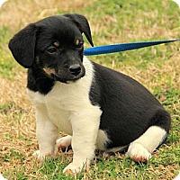 Adopt A Pet :: Lane - Staunton, VA