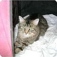 Adopt A Pet :: Shadow - Etobicoke, ON