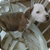 Adopt A Pet :: Ducky - Sacramento, CA