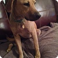 Adopt A Pet :: Tiffany - Richmond, VA