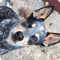 Adopt A Pet :: Zeus' Thunder Adopted - Remus, MI