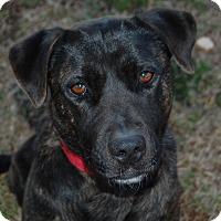 Adopt A Pet :: Roxy - Walnut Cove, NC