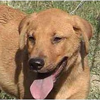 Hound (Unknown Type) Mix Dog for adoption in Tyler, Texas - TG-Clifford
