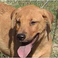 Adopt A Pet :: TG-Clifford - Tyler, TX