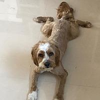 Adopt A Pet :: ZZ-Lucky *courtesy post - Rancho Santa Margarita, CA