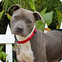 Adopt A Pet :: Magic - Los Angeles, CA