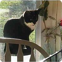 Adopt A Pet :: Skipper - Summerville, SC