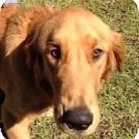Adopt A Pet :: Kieran - New Canaan, CT