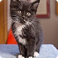 Adopt A Pet :: Mercury - Grand Rapids, MI