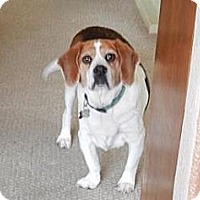 Adopt A Pet :: Jake Putman - Phoenix, AZ