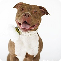Adopt A Pet :: MAE - LOS ANGELES, CA