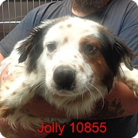 Adopt A Pet :: Jolly - Greencastle, NC