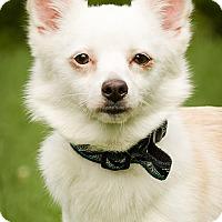 Adopt A Pet :: Zoey - Owensboro, KY