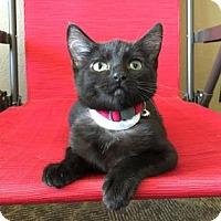 Adopt A Pet :: Shiloh - Wichita, KS