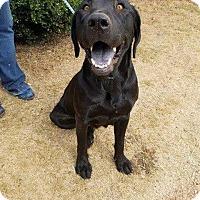 Adopt A Pet :: Jill Spooky mom of 7 - Pompton Lakes, NJ