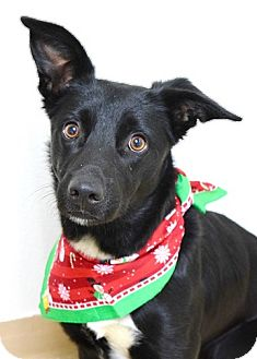 Border Collie Mix Dog for adoption in Dublin, California - Betty