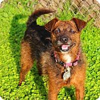 Adopt A Pet :: Ethel - Shreveport, LA