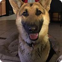 Adopt A Pet :: Ginny - Kansas City, MO