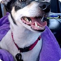Adopt A Pet :: Girl - Allentown, PA