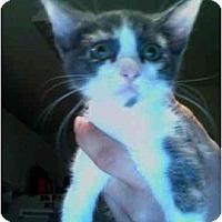 Adopt A Pet :: Missy - Davis, CA