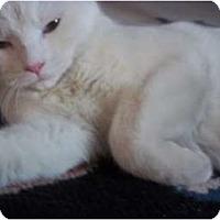 Adopt A Pet :: GIZ - Little Neck, NY