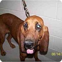 Adopt A Pet :: Millie - Carrollton, GA