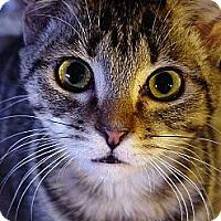 Adopt A Pet :: Sookie - Chesapeake, VA