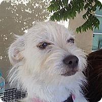 Adopt A Pet :: Sugar and spice - Temecula, CA
