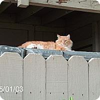 Adopt A Pet :: Sam I Am - NEWCASTLE, CA
