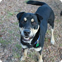 Adopt A Pet :: Cole - Knoxville, TN