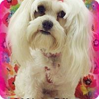 Adopt A Pet :: Miss Kitty - Anaheim Hills, CA