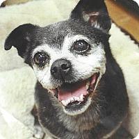 Adopt A Pet :: Lily - Chapel Hill, NC