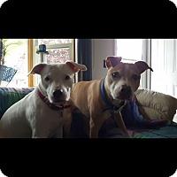 Adopt A Pet :: Owner Died Bonded seniors - Upper Sandusky, OH