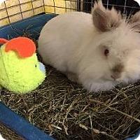 Adopt A Pet :: Blossom - Woburn, MA