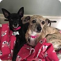 Adopt A Pet :: Ebony & Ivy - Delaware, OH