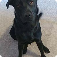 Adopt A Pet :: Harlem - Jacksonville, NC