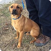 Adopt A Pet :: Romeo - Windham, NH