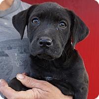 Adopt A Pet :: Thomas - Oviedo, FL