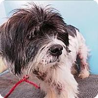 Adopt A Pet :: Rosco - Portland, OR