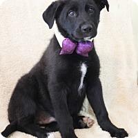 Adopt A Pet :: Brian Smith - Dalton, GA