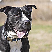Adopt A Pet :: Smitty - Windsor, VA