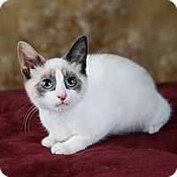 Adopt A Pet :: Lilac - Eagan, MN