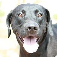Adopt A Pet :: Sir Lancelot - Canoga Park, CA