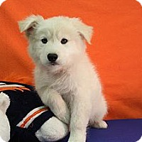 Adopt A Pet :: Prater - Broomfield, CO