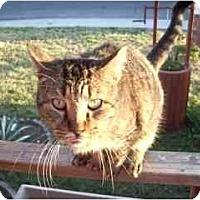 Adopt A Pet :: JJ - Scottsdale, AZ